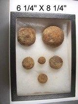 Dug Civil War Relics-Display Box of 6 Small Canon Ball & Grape Shot - 4 of 4