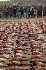 Wingshooting Adventures -Driven Pheasant Shooting in Hungary for 2021. Date to be announced first of the year. - 6 of 17