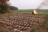 Wingshooting Adventures -Driven Pheasant Shooting in Hungary for 2021. Date to be announced first of the year. - 3 of 17