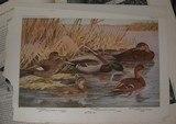 BIRDS OF AMERICA 1936 DOUBLEDAY EDITION