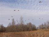 Skeeter Branch Hunting Preserve - 3 of 10