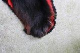 Black Bear Rug - 6 of 15