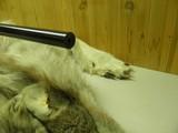 SAKO MODEL AI VIXEN CAL: 6PPC BENCHRESTSINGLE SHOT TARGET RIFLE, CONDITION 99.5%++ - 4 of 8