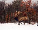 World Class Trophy Elk Hunts - 12 of 12
