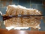 Beautiful Chapuis Armes 16 gauge Side by Side Progress Model
