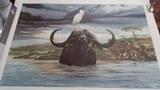 Cape Buffalo Print by Ray Harm