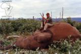 Ngwarati Safaris Africa offers 10 Day Elephant Bull Hunt - 4 of 10