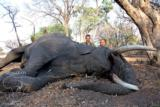 Ngwarati Safaris Africa offers 10 Day Elephant Bull Hunt - 6 of 10