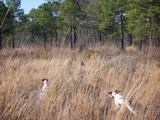 Quail hunting club seeking four new members.