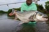 Tanzania Tigerfish and more - 9 of 10