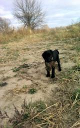 Bird Dog Training - 3 of 5