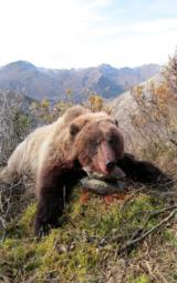 Outdoor Escapes, Alaskan Spring or Fall Grizzly Bear Hunt