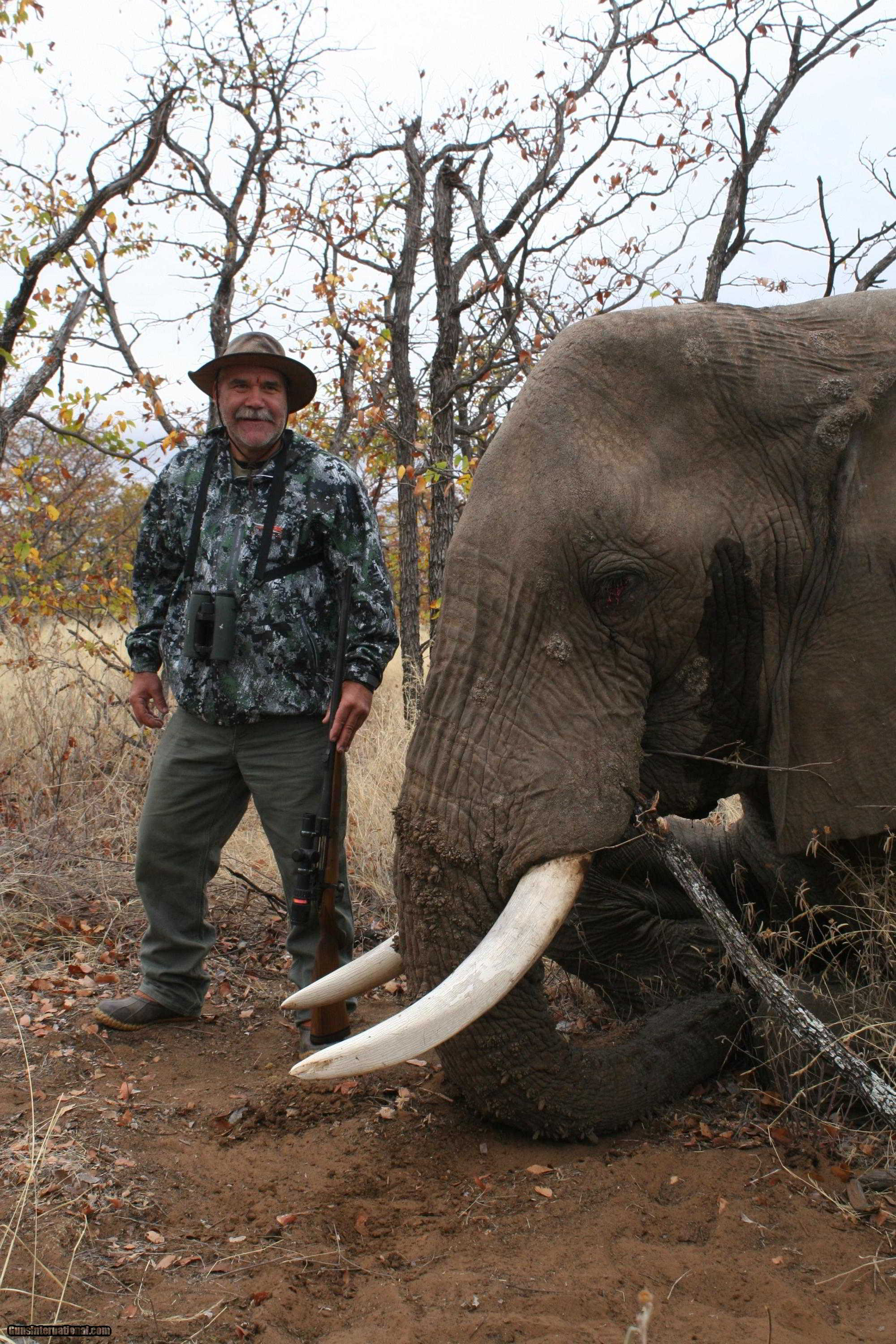 TROPHY BULL ELEPHANT HUNTING IMPORTABLE TO THE USA
