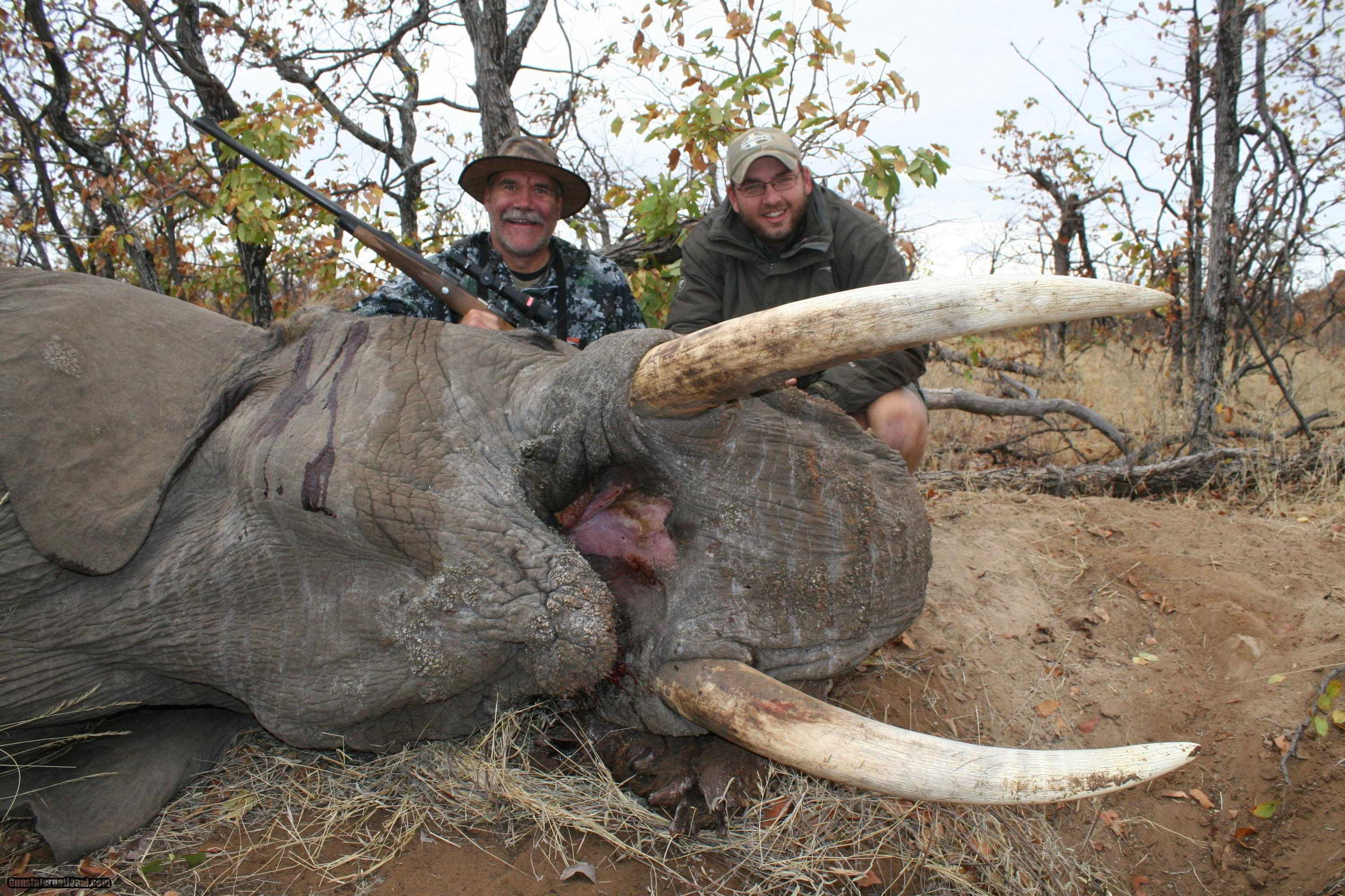 TROPHY BULL ELEPHANT Cancelation Package IMPORTABLE TO THE USA