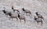 Idaho Hunting Ranch near Boise with Bird Hunting, Mule Deer and Elk hunting! Owner Financing!!! - 4 of 12