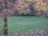 LAKE and HUNTING Property, NC Mountains, spring/stream, USFS Border. OWNER FINANCING - 12 of 15