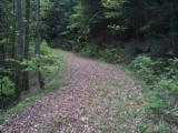 LAKE and HUNTING Property, NC Mountains, spring/stream, USFS Border. OWNER FINANCING - 5 of 15