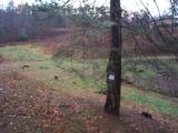 LAKE and HUNTING Property, NC Mountains, spring/stream, USFS Border. OWNER FINANCING - 6 of 15