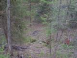 LAKE and HUNTING Property, NC Mountains, spring/stream, USFS Border. OWNER FINANCING - 8 of 15