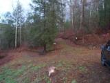 LAKE and HUNTING Property, NC Mountains, spring/stream, USFS Border. OWNER FINANCING - 10 of 15