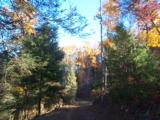 LAKE and HUNTING Property, NC Mountains, spring/stream, USFS Border. OWNER FINANCING - 7 of 15