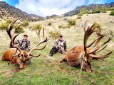 Red Stag Hunting- New Zealand Safaris