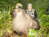 Bull Tahr Foot Hunt on Free Range private land- New Zealand Hunting Safaris