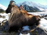 Bull Tahr Foot Hunt on Free Range private land- New Zealand Hunting Safaris