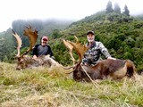 Red Stag & Fallow Buck combination hunt- 4 of 12