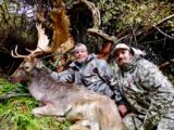 Red Stag & Fallow Buck combination hunt- 6 of 12