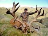 Red Stag & Fallow Buck combination hunt