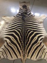 Large African Burchell Zebra Rug