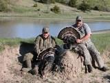 Nebraska Trophy Merriams Turkey Hunt!! High Success!! - 5 of 5