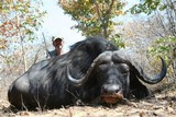 10 Day hunt for monster Cape Buffalo!! FAIR CHASE!! 100% SHOOTING!! - 9 of 13