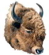 Montana bison head