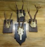 Roe deer collection of 4 plaque mounts.
