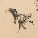 """""""Rice Field Pintails"""" etching by Richard Bishop - 3 of 4"""