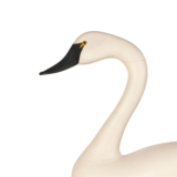 Swan Decoy - 3 of 4