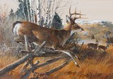 """White Tail"" Acrylic on Board by Dennis Anderson"