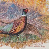 Pheasant Pair by the Old Barn by Glenn Emmons - 3 of 4