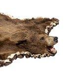 Cinnamon Black Bear - 3 of 7