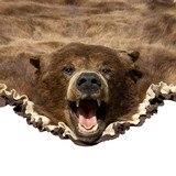 Cinnamon Black Bear - 4 of 7