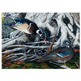 wood duck pair by jim collins