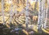 Among the Aspens by Michael Melander - 2 of 3