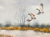 Waterfowl by Bruce Dines - 3 of 4