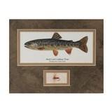 Cutthroat Trout Framed Print